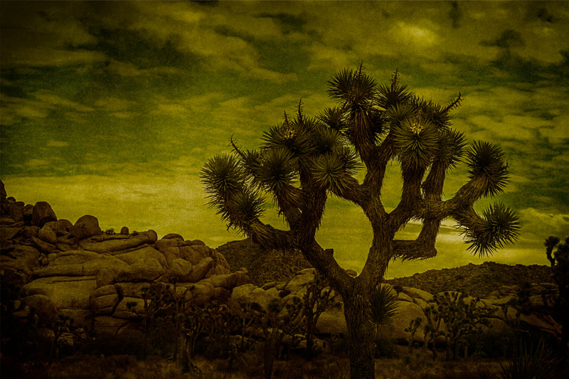 joshua tree dusk rocks clouds art