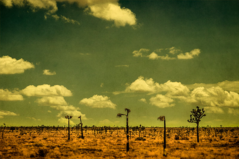 joshua tree horizon clouds landscape fine art