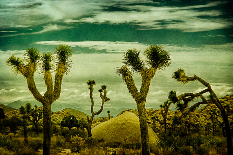 joshua tree rocks clouds art 1