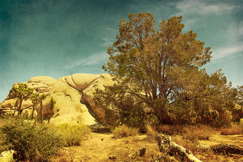 joshua tree rocks landscape fine art
