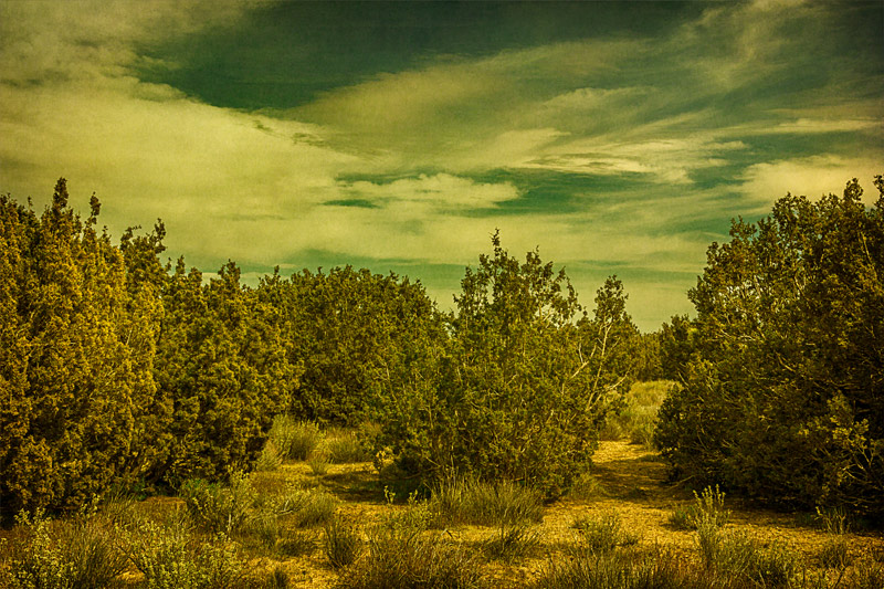 antelope valley arthur b ripley juniper trees clouds art
