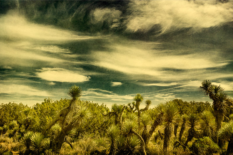antelope valley arthur b ripley juniper trees clouds fine art