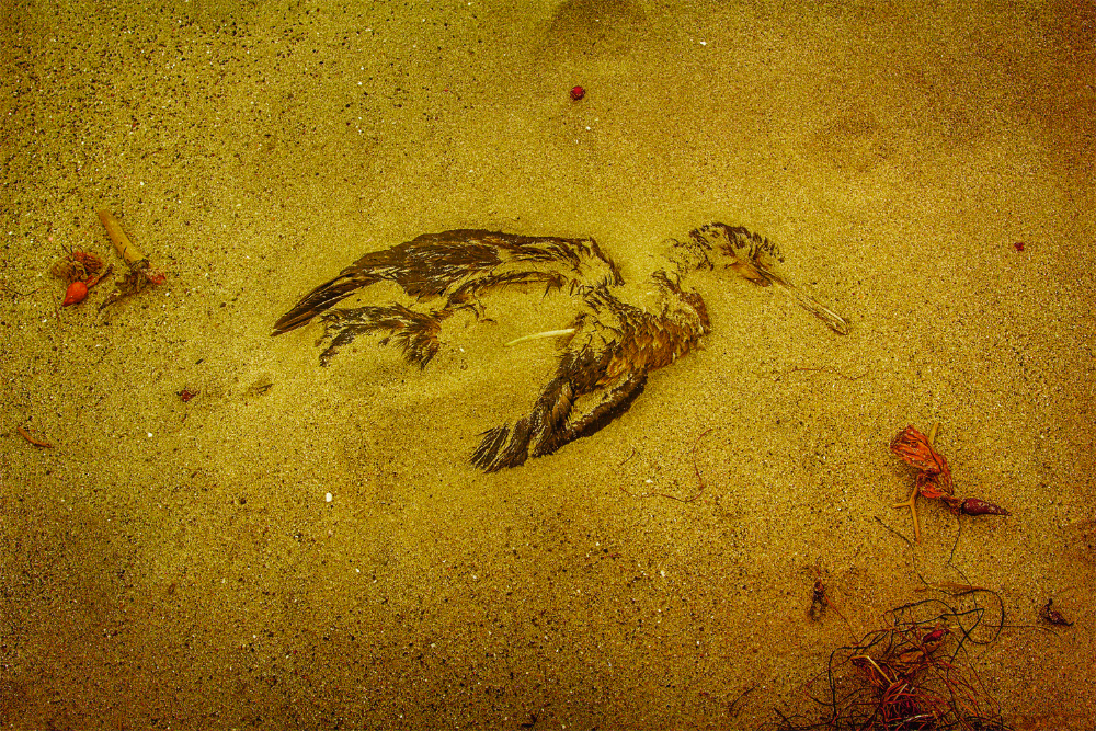 dead duck SoCal Seascapes