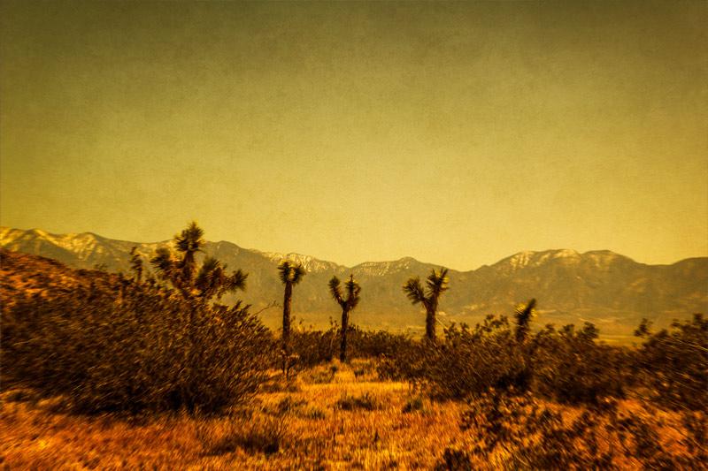 desert woodland saddleback butte park mojave