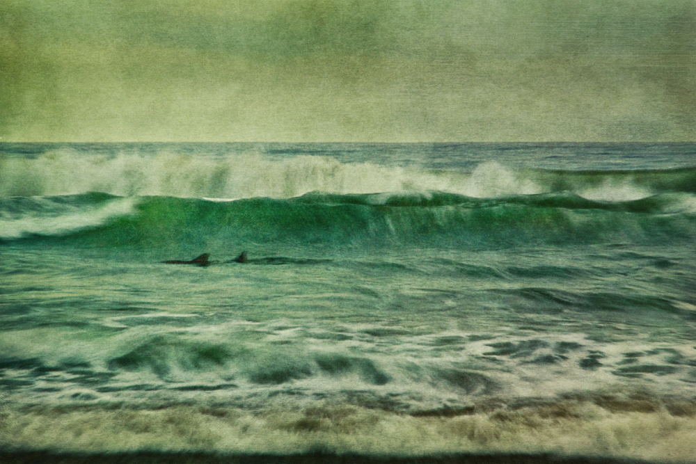 dolphins in surf SoCal Seascapes