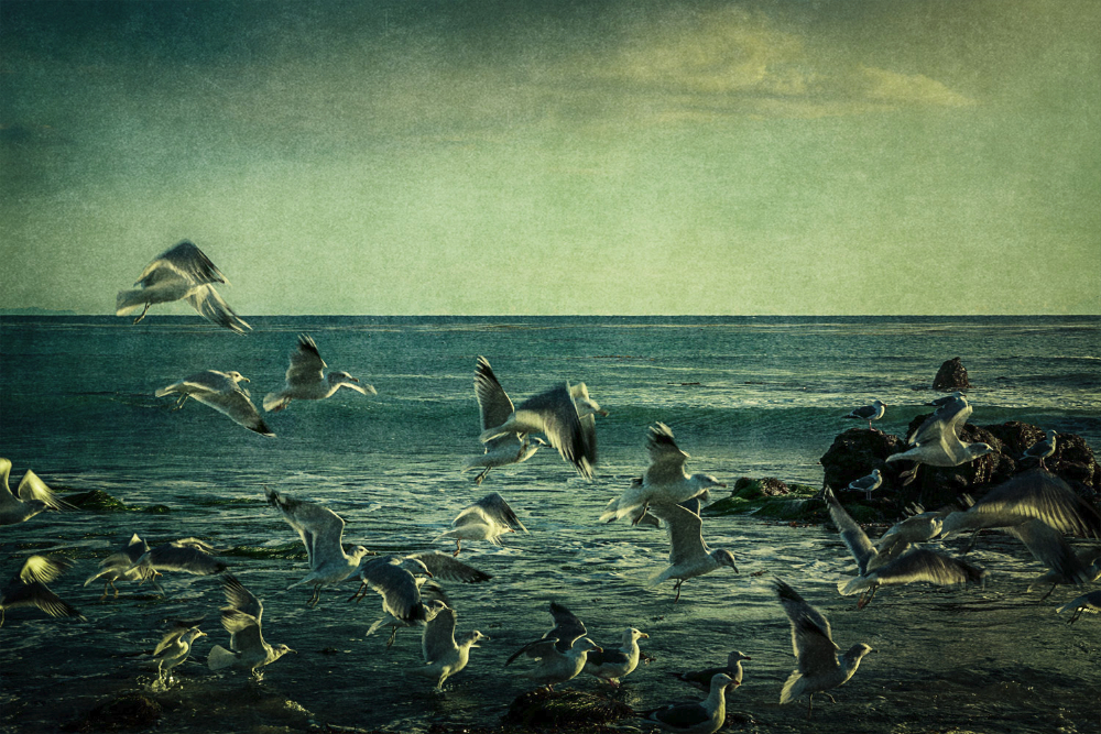 gulls landing SoCal Seascapes