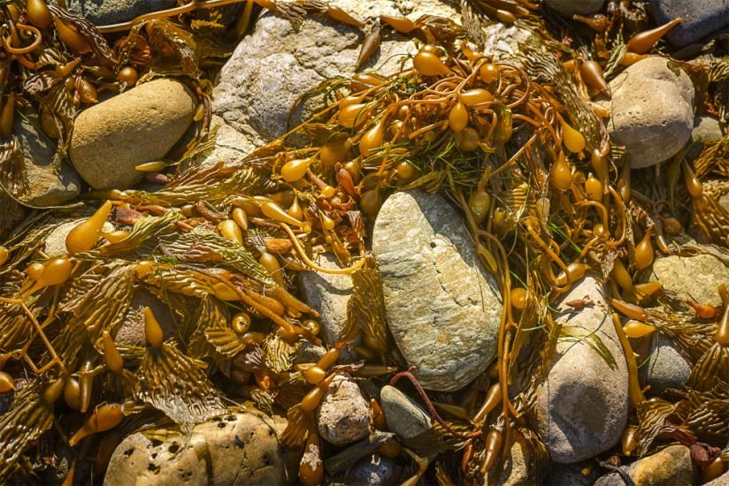 Seaweed and Rocks