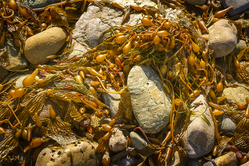 seaweed and rocks SoCal Seascapes