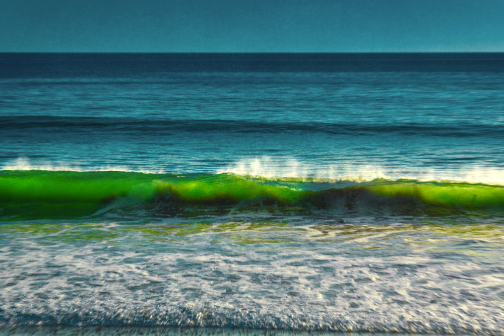 seaweed in green tube SoCal Seascapes