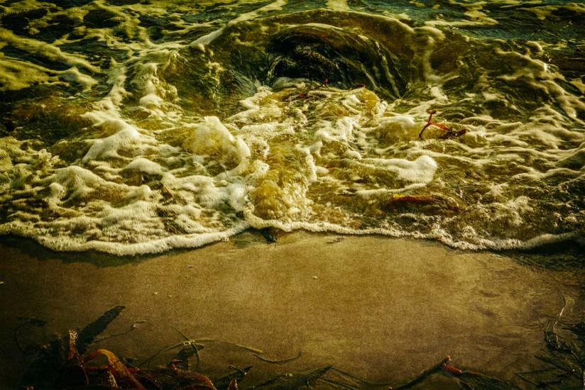 Shoreline with seaweed